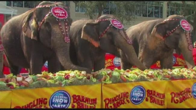 no more elephants_162422
