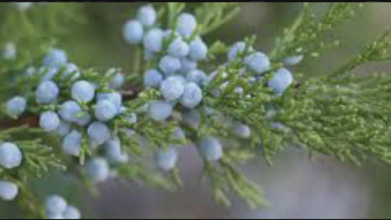 j herbs_201213