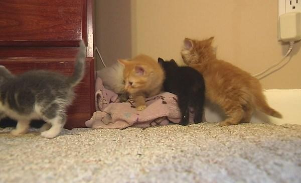 kittens_191677