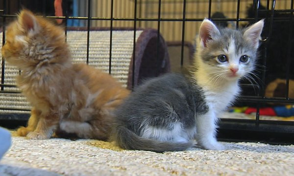 Kittens found in wall_47694