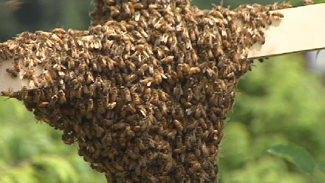 Bees_216823