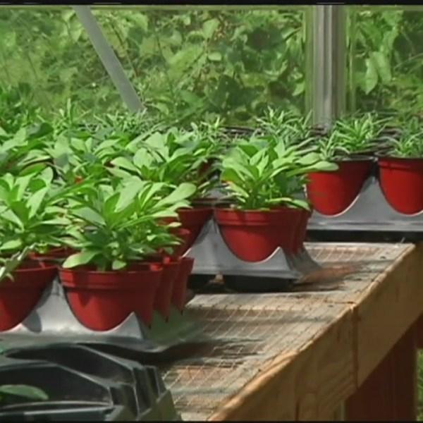 vegetable gardening tips_214758