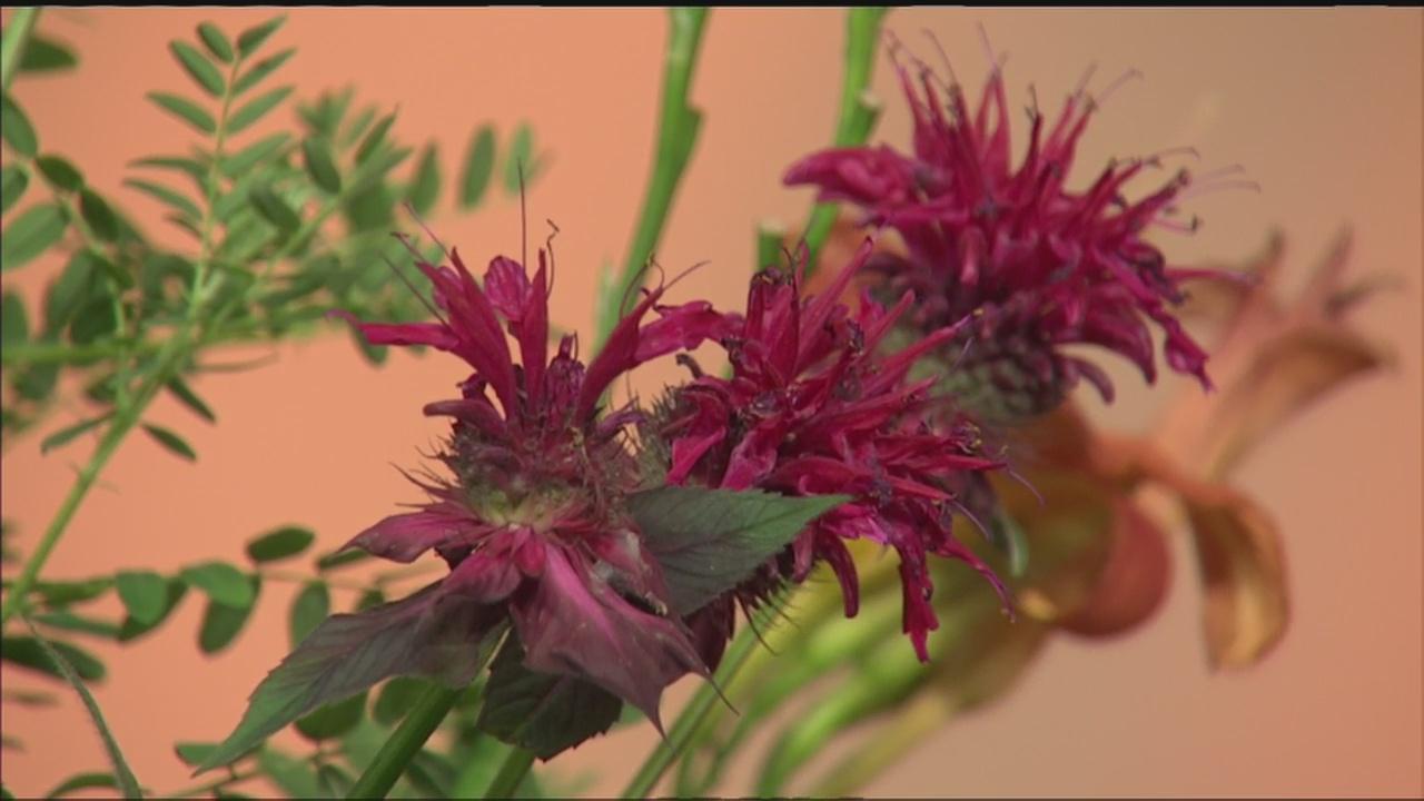 herbs_237171