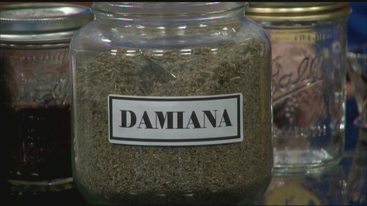 damiana_357685