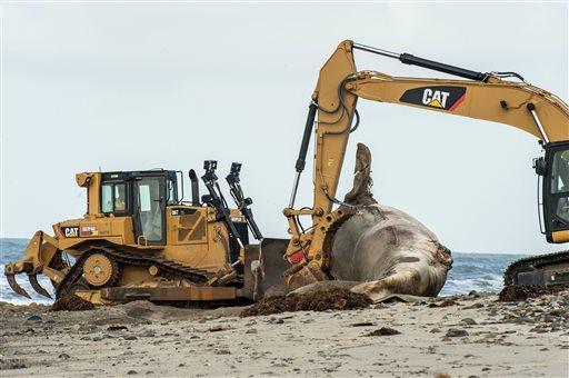 Dead Whale_386174