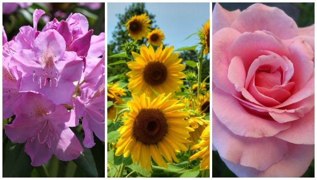 FlowersforMomCollage_193858