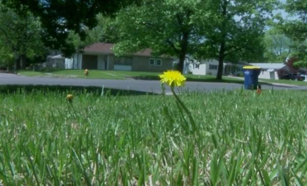 grass_388673