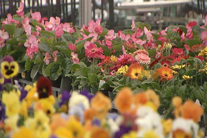 plants flowers_389478