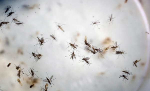 Congress Zika Virus Things to Know_403431