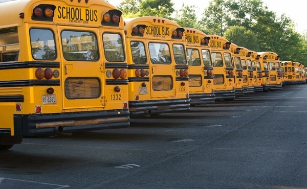 school buses_243899