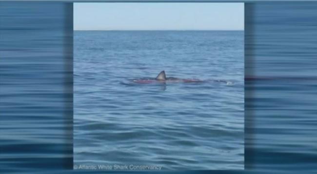 Shark mass_443364
