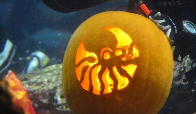 South Carolina Aquarium Underwater Pumpkin Carving Competition October 2016_486005