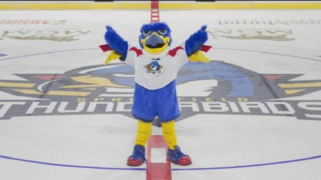 springfield-thunderbirds-mascot-boomer_464828