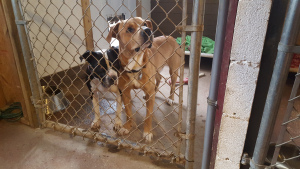 Two dogs wait to get adopted at Perry County Animal Rescue.