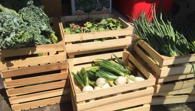 go fresh mobile farmers market_422512