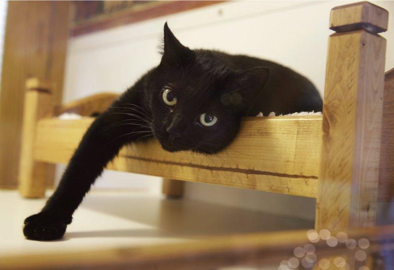 black cat_550097