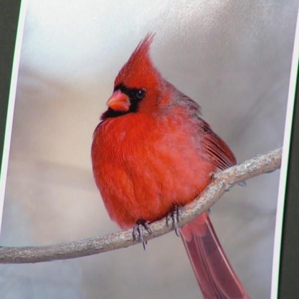 bird_543267