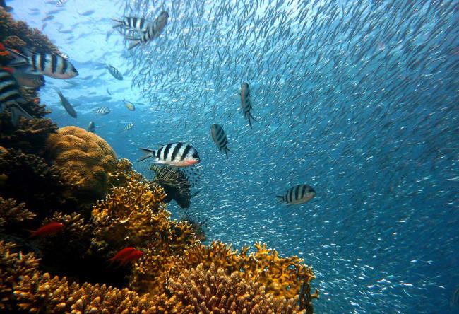 coral reef fish_575107