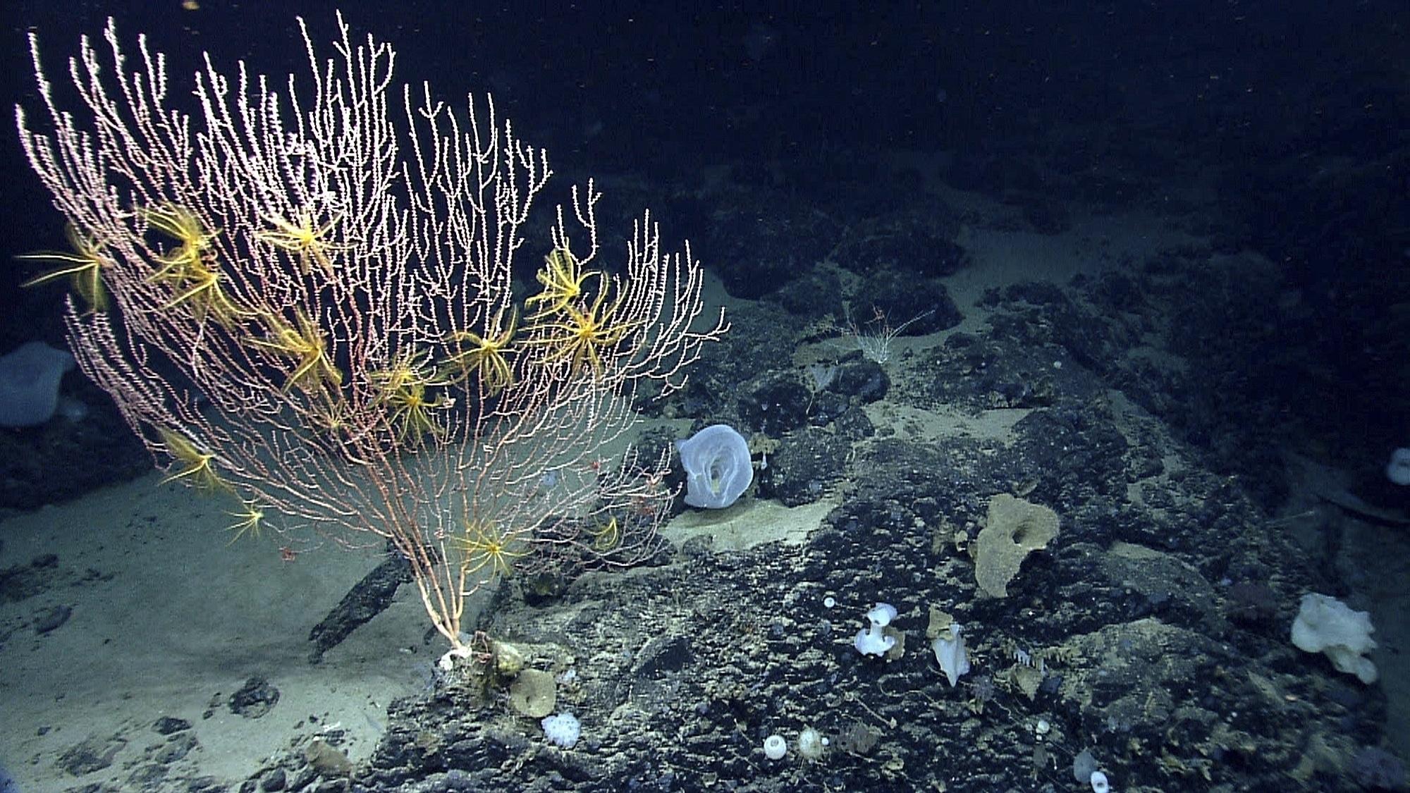 Seamounts Marine National Monument_467069