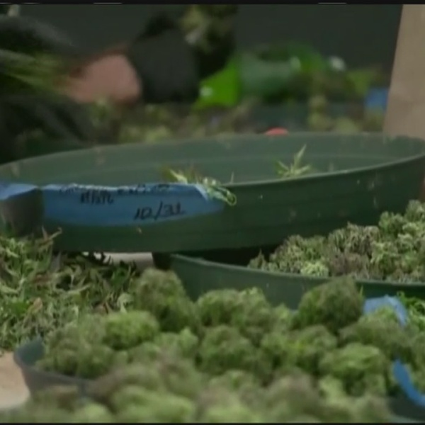 Medical marijuana use could impact your employment in Massachusetts