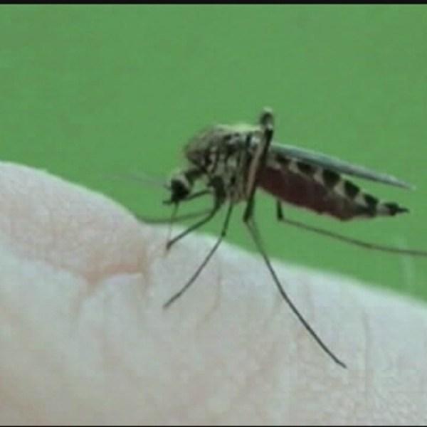 EEE mosquito_427342