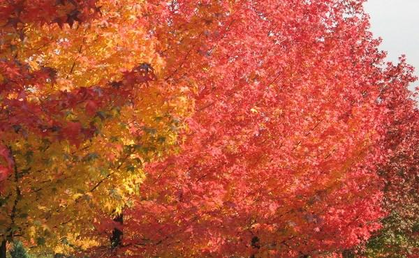 generic-istock-foliage-resized_272852