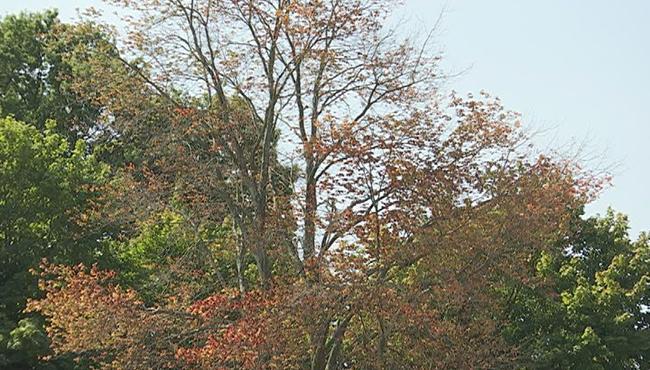 fall foliage_697020