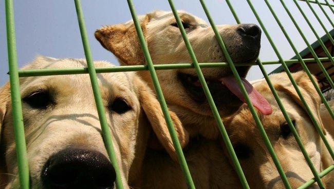 dog (NEWS10)_797258