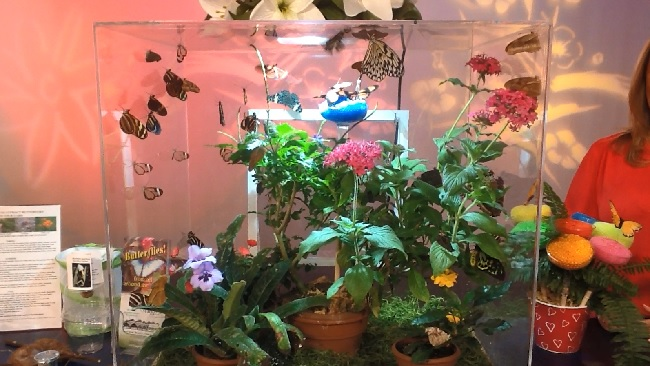 Check Out The Ct Flower And Garden Show