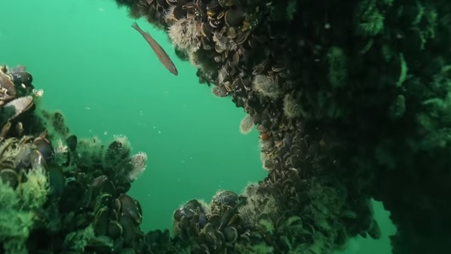 under water_801588