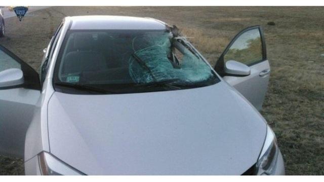Norton turkey into windshield_1522543824899.jpg_38784307_ver1.0_640_360_1522576372275.jpg.jpg
