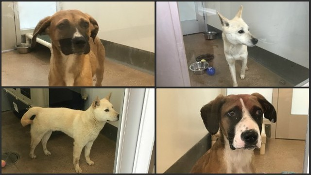 Dogs rescued from South Korean meat farm arrive in RI