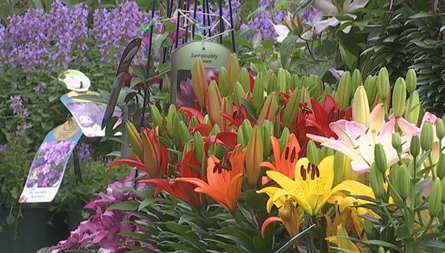 flowers plants greenhouse_622903