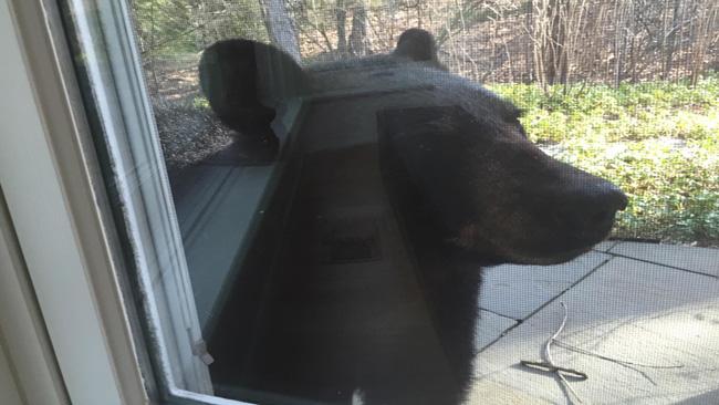 longmeadow bear 2_1524584798064.jpg.jpg