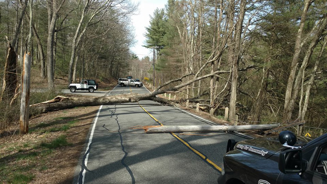 Brimfield tree down