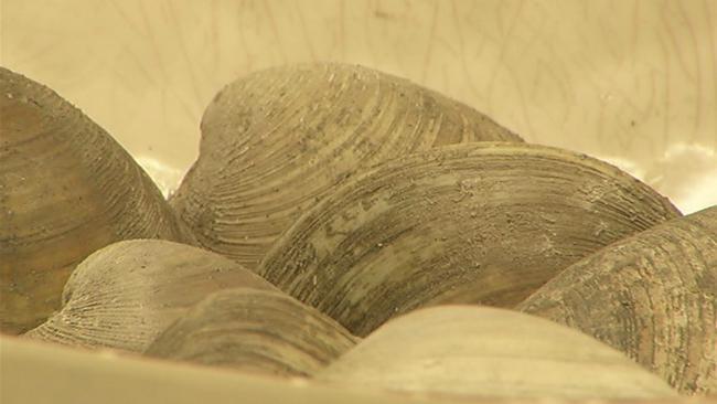essex clams sewage_1527713632116.jpg.jpg