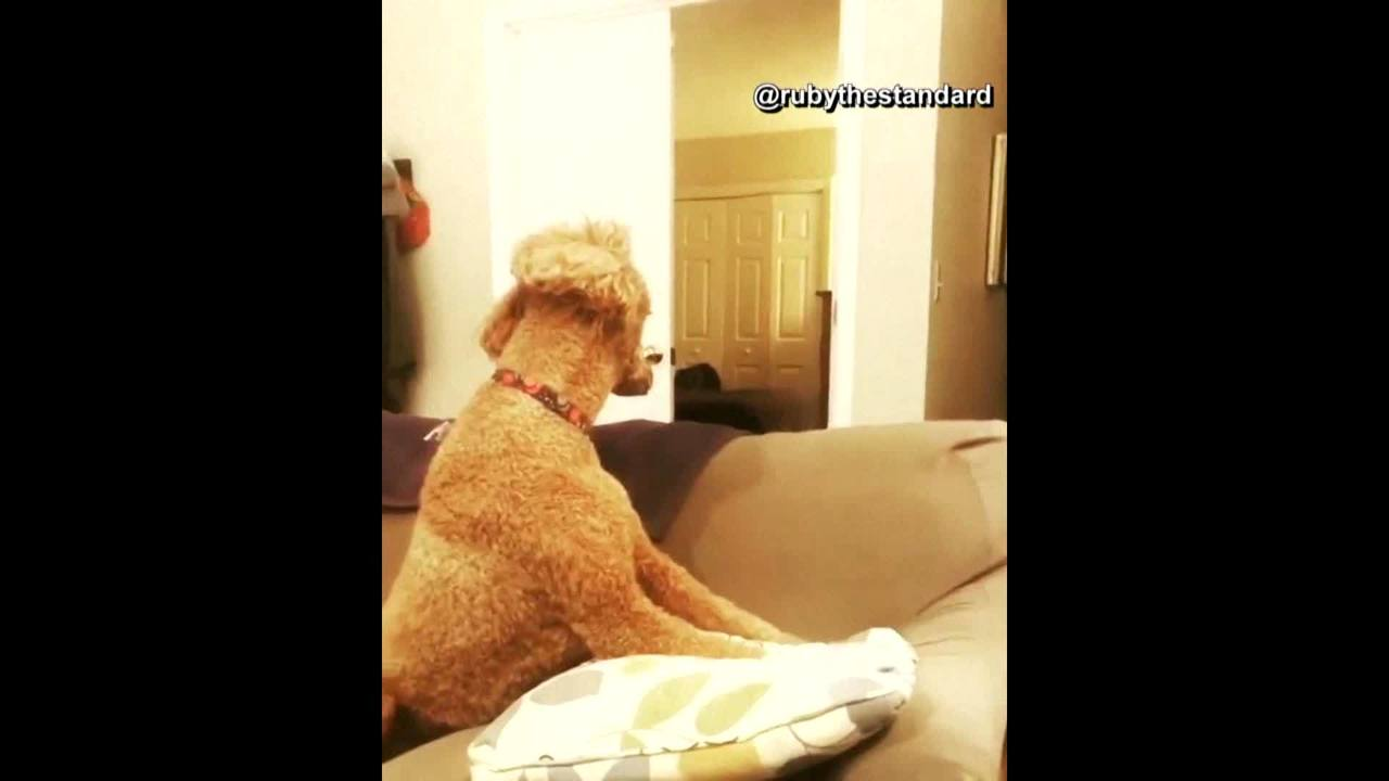 Latest_viral_video_challenge_has_dogs_th_0_47100325_ver1.0_1280_720_1530295233206.jpg