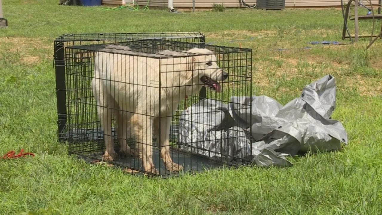 Dogs Rescued From Ravine