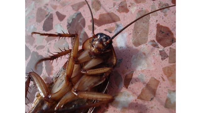cockroach_1527787828905_44054327_ver1.0_640_360_1527875756853.jpg