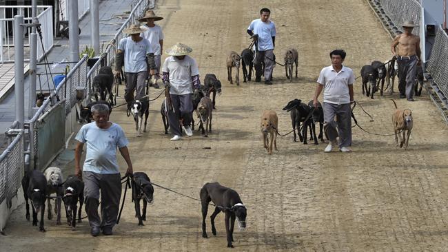 China Macau Race Dogs_1532169996435