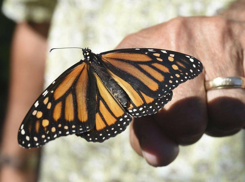 Butterflies_1532248499811.jpeg