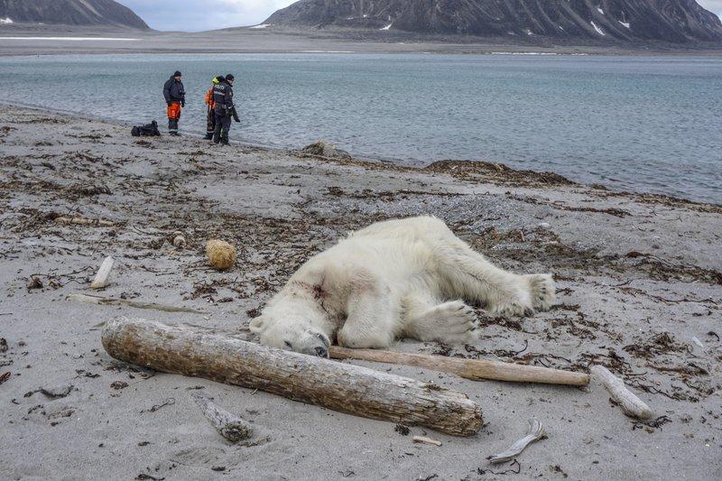 Polar Bear_1532857192008.jpeg.jpg