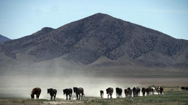 Wild Horses Drought_1532344889845
