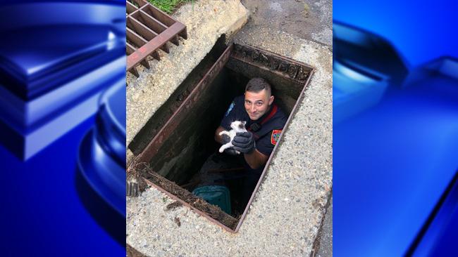 West Hartford kitten rescue_1534756996373.jpg.jpg