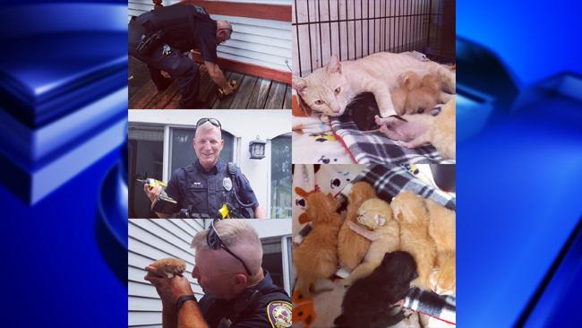West Springfield kitten rescue_1534778719579.jpg.jpg