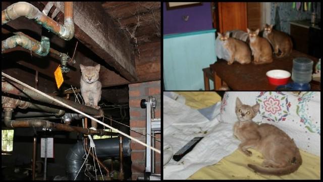 dead cats wpri_1534466712277.jpg.jpg