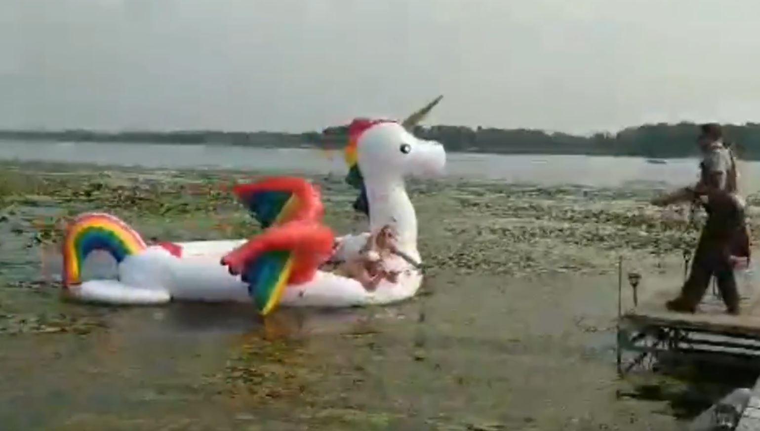 minnesota unicorn rescue_1534112125935.jpg-846652698-846652698.jpg
