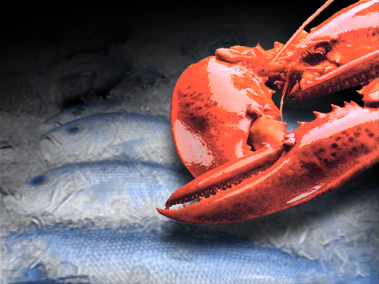 lobster_1537711502551.jpg