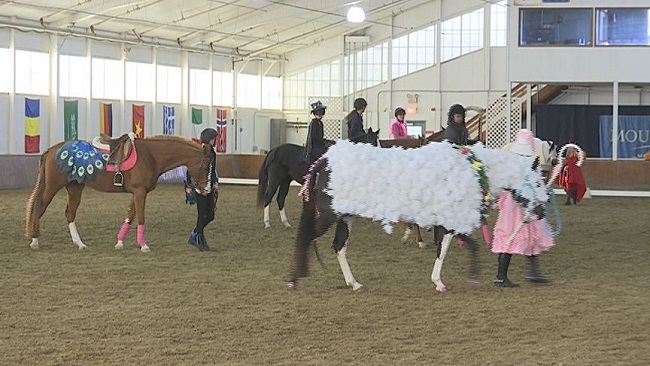 breast cancer horse show