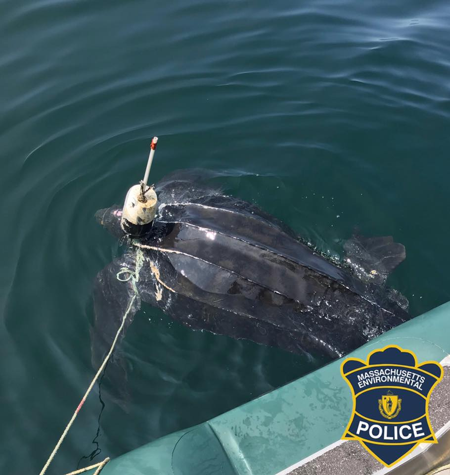 sea turtle rescue 2_1535300710744.jpg.jpg